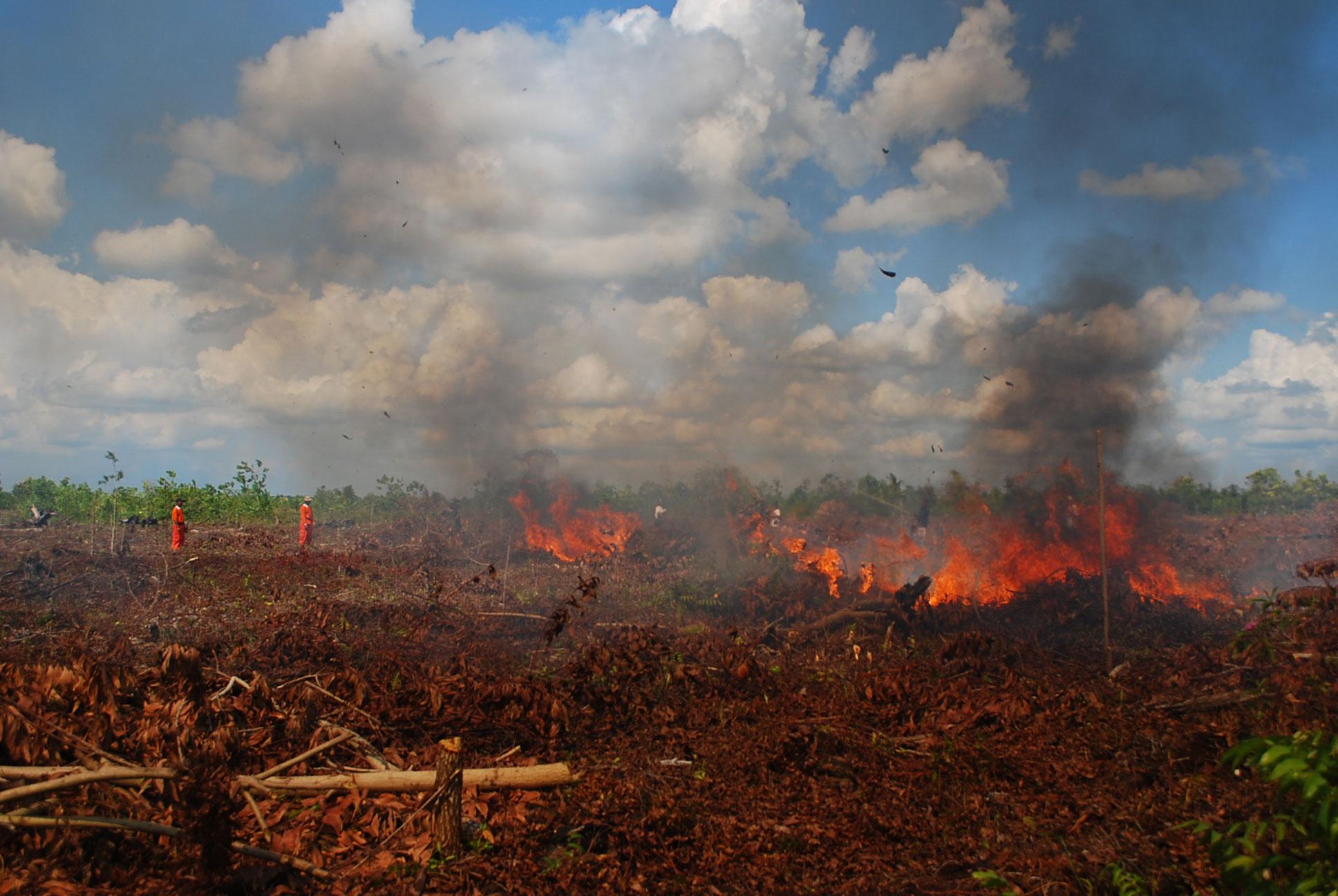 Kebakaran Hutan dan Lahan Gambut di Kalimantan Tengah ...
